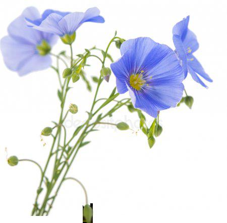 shrot-flowers